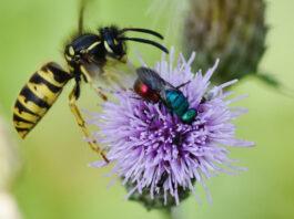 Insektenzählung zum Insektensommer